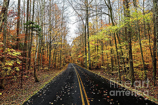 The Road To Fall by Paul Mashburn