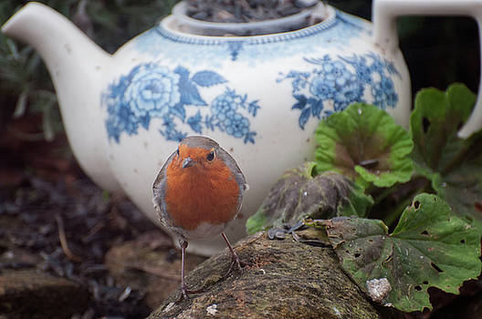 The Robin and The Teapot by Suesy Fulton