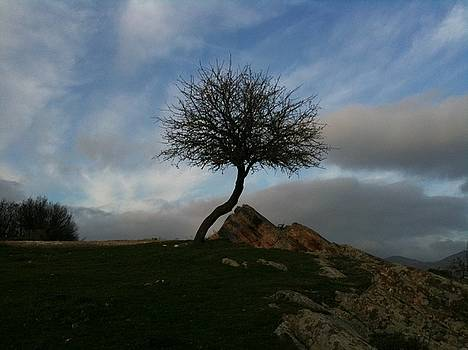 The Rock And The Tree1 by Kostas Antoniou