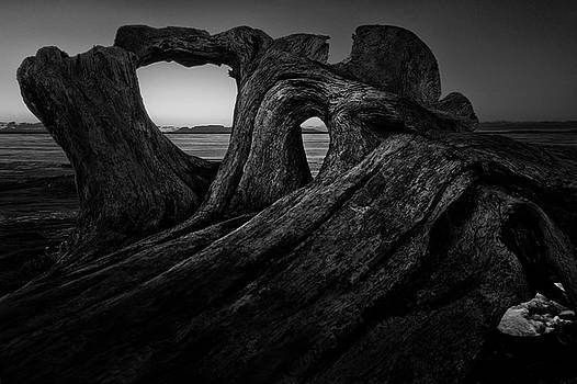 The roots of the Sleeping Giant BW by Jakub Sisak