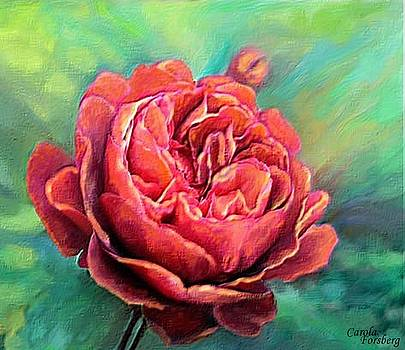 The Rose by Carola Ann-Margret Forsberg