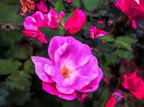 The Rose Garden by Debra Lynch