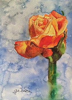 The Rose by Glen Ward
