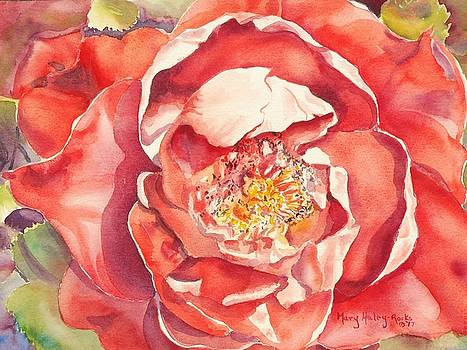 The Rose by Mary Haley-Rocks