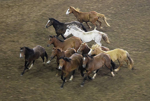 The Roundup by Phyllis Britton