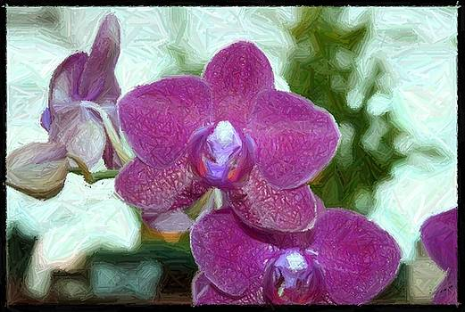 The Royal Orchidaceae by Sharon Spade - Kingsbury
