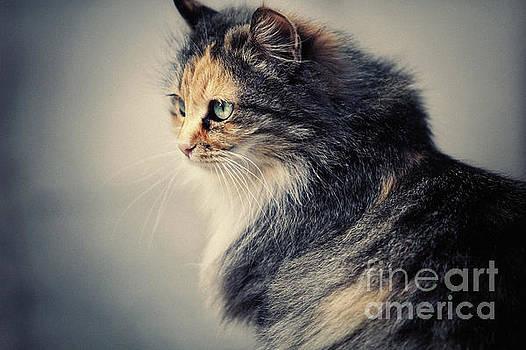 The Sad Street Cat by Dimitar Hristov