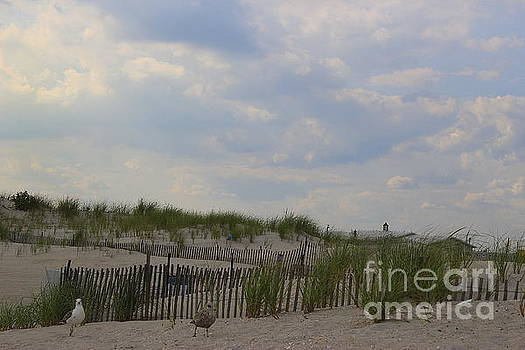 The Sand Dunes at Point Lookout, New York by Dora Sofia Caputo Photographic Design and Fine Art