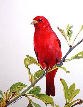 The Scarlett Tanager  by Brenda Beck Fisher
