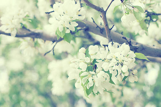 The scent of Spring by Angela King-Jones