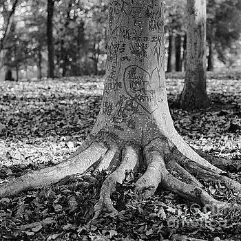The  Scribble Tree by Patrick M Lynch