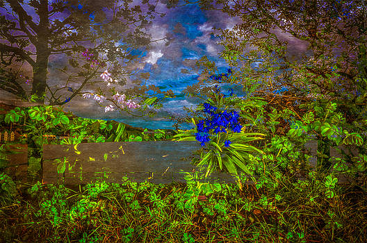 The Sea Beyond The Woods by Tylie Duff