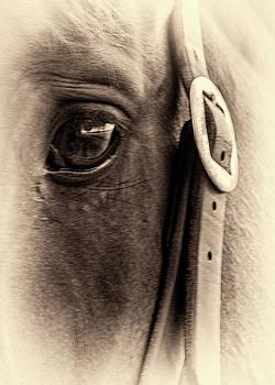 The Seer by Winnie Chrzanowski