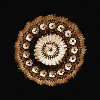 The Sepia Feather and Beadwork of Flower by Jacqueline Migell