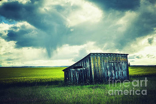 The Shed by Katya Horner