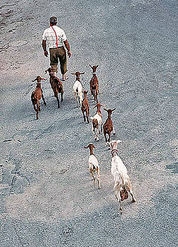 Mary Attard - The Shepherd