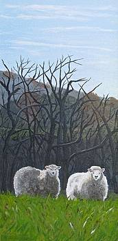 The Shepherd's Sheep by Barb Pennypacker