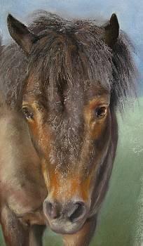 The Shetland Pony by Sabina Haas