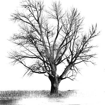 The Silent Tree by Paul Szakacs