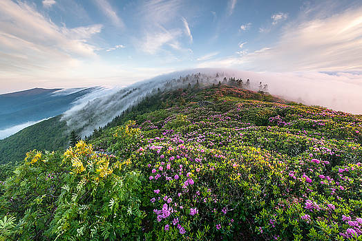 The Silky Embrace of the Roan Highlands by Mark VanDyke