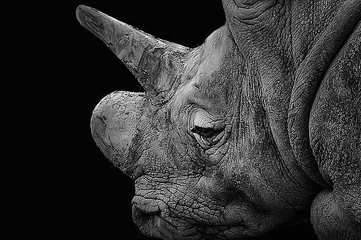 The sleepy Rhino by Alan Campbell