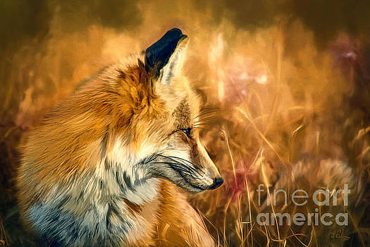 The Sly Fox by Tina LeCour