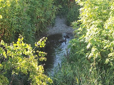 The Small Stream by Lisa Stunda