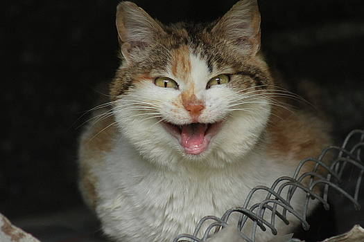 The Smiling Cat by Valia Bradshaw