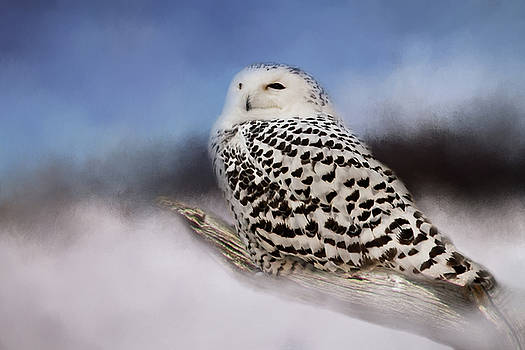 The Snowy Owl by Lana Trussell