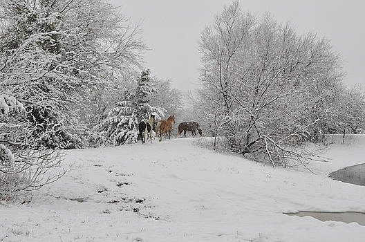 The Snowy Trail by Gail Finger