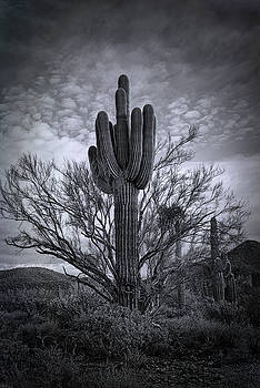 Saija Lehtonen - The Sonoran Sentinel