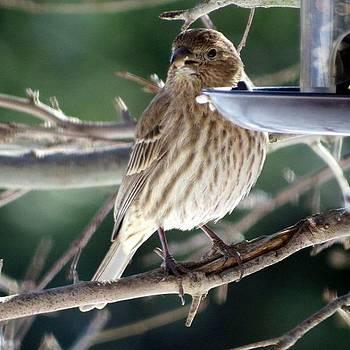 The Sparrow By Tammy Finnegan by Tammy Finnegan