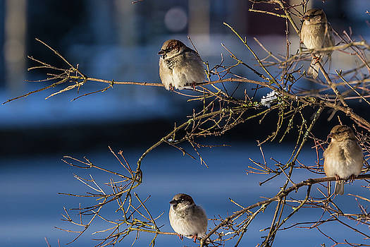ReDi Fotografie - The sparrows community