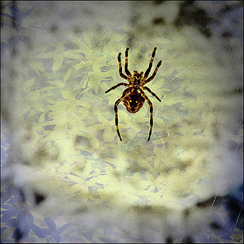 Chris Lord - The Spider Waits