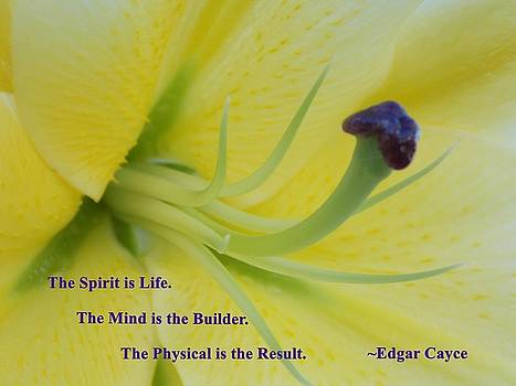 The Spirit is Life by Coleen Harty