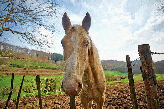 The Stallion by Chris Hood