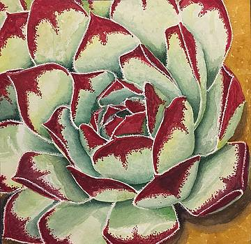 The Succulent or Cactus by Sharon Gerber