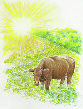 The Sunny Cow by Emily MacDonald