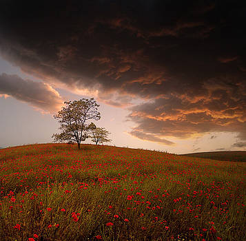 The Sunset of the Poppies - 2 by Stoyanka Ivanova