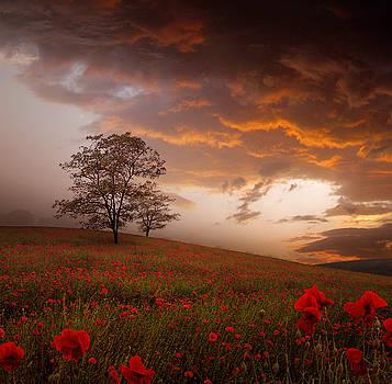 The Sunset of the Poppies by Stoyanka Ivanova