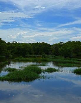 The Swamp Thing by Sarita Rampersad