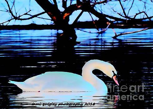 Tami Quigley - The Swan