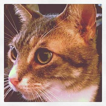 The Tabby Of My Heart ..grey...an Older by Tammy Winand