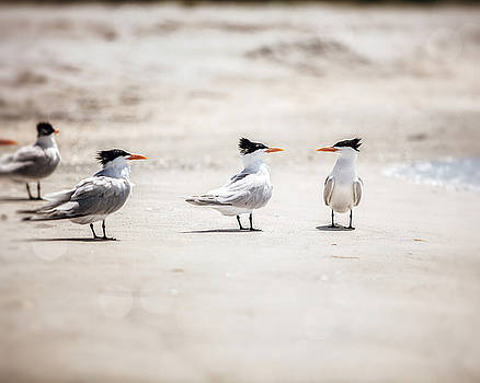 Lisa Russo - The Talking Terns