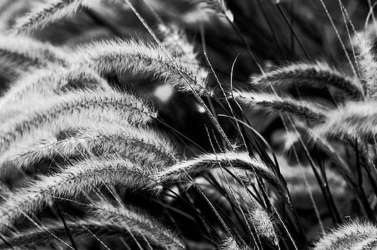 The Tall Grass by Nate Heldman