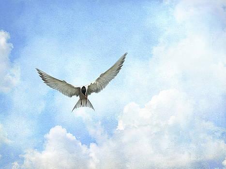 The Tern - Elegance in Flight by Andrea Kollo