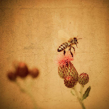 The Thistle and the Bee by Mandy Tabatt