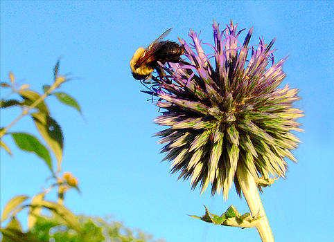 The Thistle and the Bee. by Roger Bester