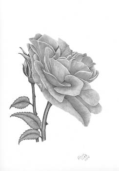 The Timeless Beauty of Roses by Patricia Hiltz