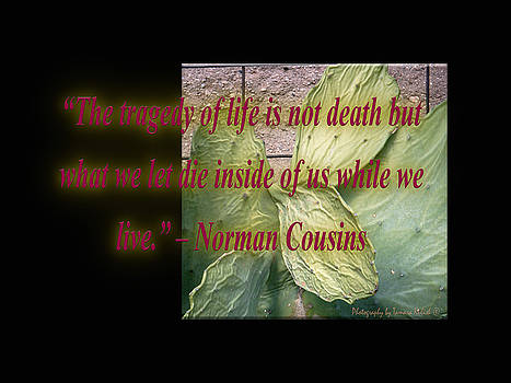 Tamara Kulish - The Tragedy of Life is Not Death But What We Let Die Inside of U